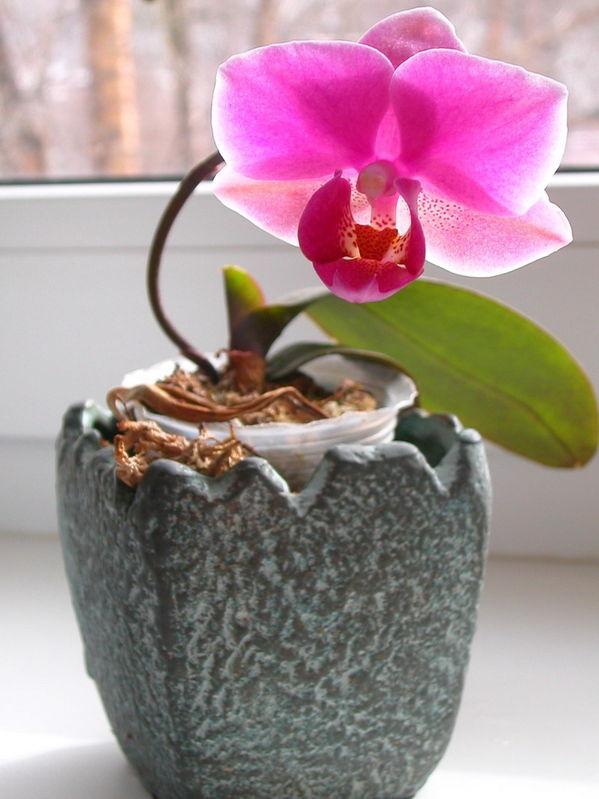 Как сделать что цвели орхидеи 976